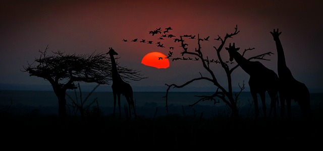 stín žiraf.jpg