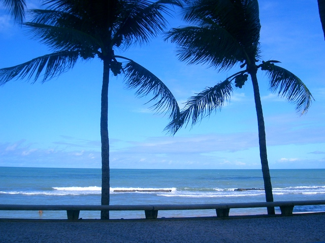 kokosové palmy na pláži u moře